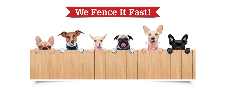 We Fence It Fast! | Dogs peaking over fence
